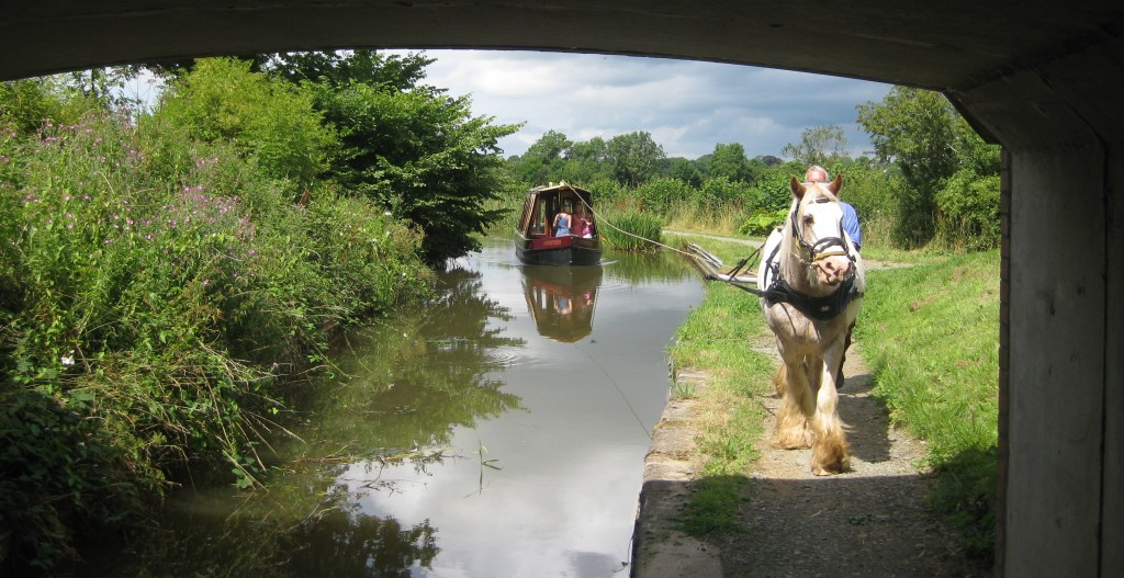 Enjoy the sedate side of life with Cracker the boat horse on the Montgomery Canal in Shropshire